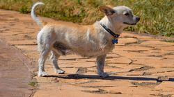 Un tuitero triunfa con su genial iniciativa para ayudar a perros