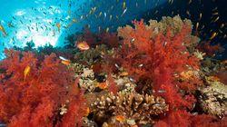 Fiesta de colores en el mar