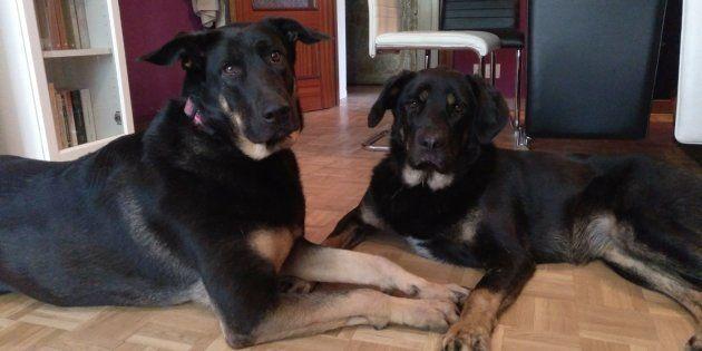 Dualla y Asli, las perras del
