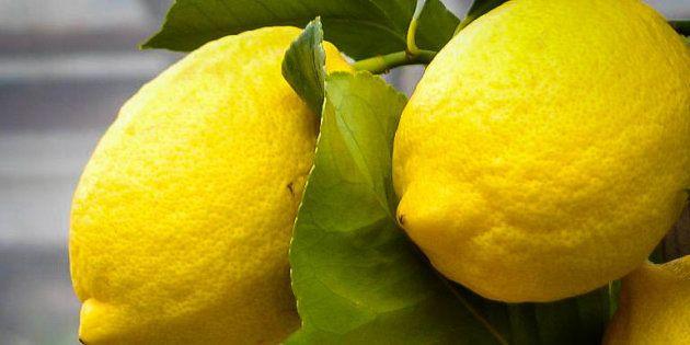 Chupar un limón, el nuevo reto viral con fines