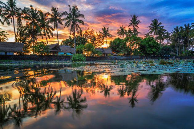 Un palmeral en Candidasa, Bali,