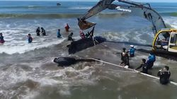 Final feliz para esta ballena