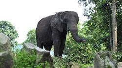 Muere un turista español tras ser embestido por un elefante en