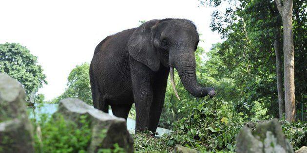 Muere un turista español tras ser embestido y corneado por un elefante en