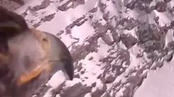 El vídeo captado por una GoPro en un águila volando por los Alpes ya es