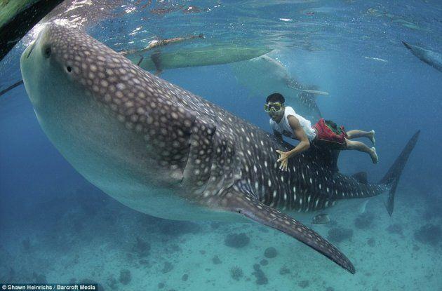 El último viaje del tiburón