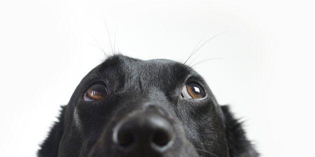 La prueba de que cuidar de un perro no siempre es
