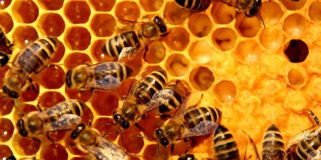 La UE prohíbe el uso en exteriores de tres insecticidas peligrosos para las