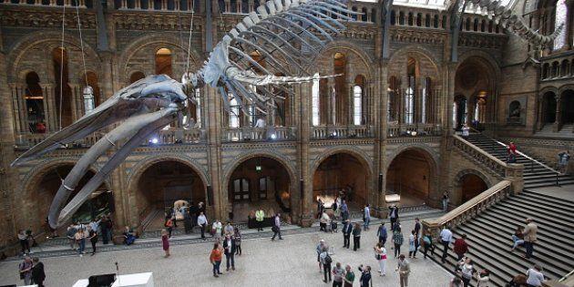 Un niño de 10 años corrige un error al Museo de Historia Natural de