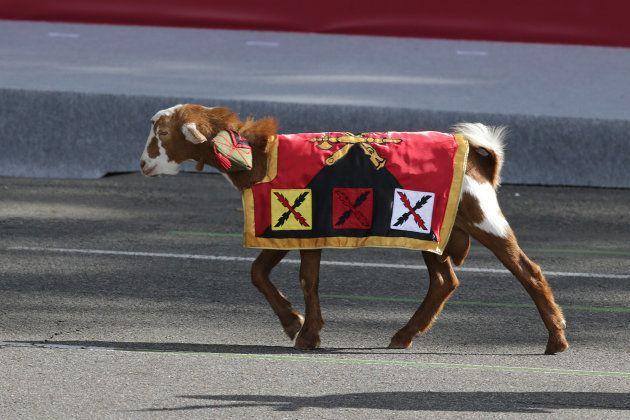 'Pablo', la cabra de la Legión que desfiló en 2015, con solo un