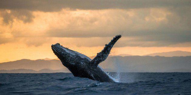 mejores lugares del mundo Los 10 Mejores Lugares Del Mundo Para Ver Ballenas El