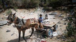 Trabajo infantil en Gaza, una lacra que no