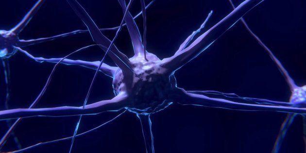 Seis formas de producir neuronas a cualquier