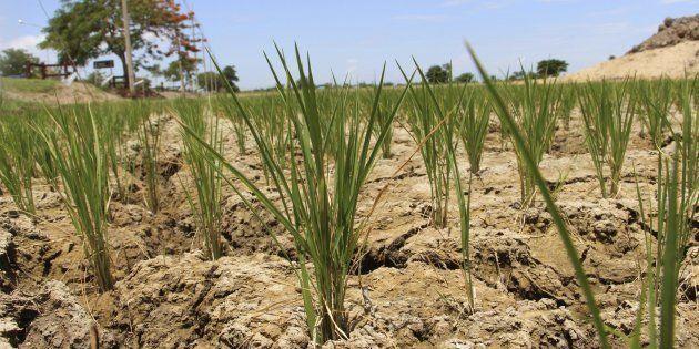Efectos de la sequía en un campo de
