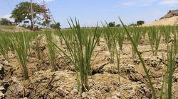 España camina hacia la peor sequía en 20