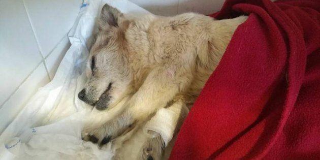 La perra 'Vida', en una imagen difundida por los