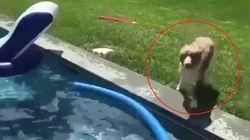 El tuit viral del perro saltando sobre su dueño en la piscina que no podrás dejar de