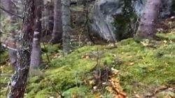 El alarmante bosque de Canadá que