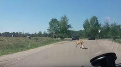 Una familia se baja del coche en un safari y sufre el ataque de unos
