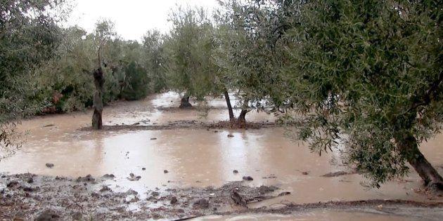 Vista de los campos en los alrededores de Arahal (Sevilla), anegados por la intensa