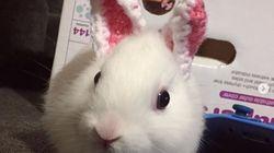 ¡Hola! Me llamo Mimi y nací sin orejas. Ahora las llevo de