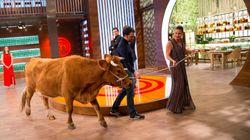 MasterChef cabrea a los fans al hablar de cómo descuartizar una vaca viva ante las
