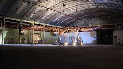 El dinosaurio más grande del mundo ya tiene
