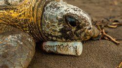 Seis fotos conmovedoras que captan la naturaleza en
