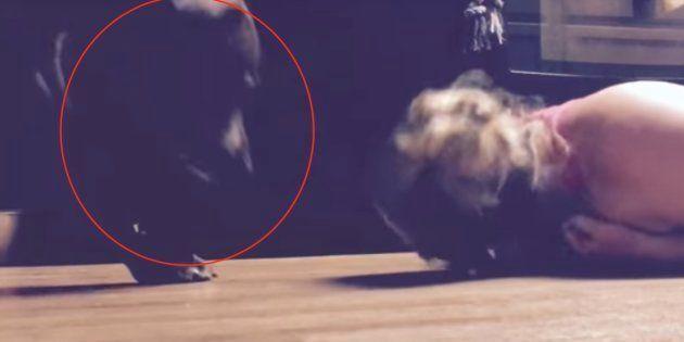 Este perro protege a su dueña durante sus convulsiones epilépticas y arrasa en las