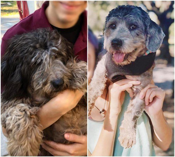 24 fotos que captan la felicidad de los perros al encontrar a su familia