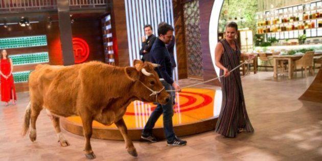 Los ganaderos gallegos, indignados con 'Masterchef' por lo ocurrido en el último
