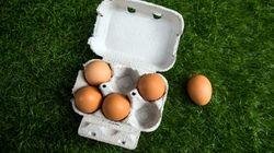 Inmovilizadas en Vizcaya 20 toneladas de huevo líquido