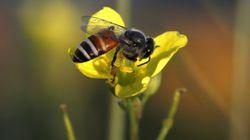 Jaque a los pesticidas que acaban con las