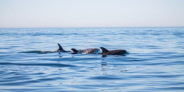 Muere una cría de delfín al ser acosada y manoseada por los bañistas en una playa de