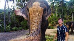 Habíamos visto muchos 'selfies', pero no 'elfies': mira el que ha tomado un elefante con su