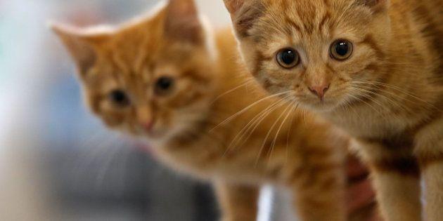 Por qué Twitter se ha llenado de gatos tras el atentado de