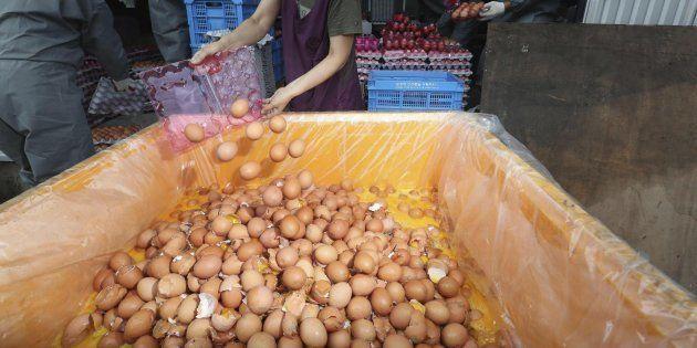 Funcionarios se deshacen de huevos contaminados en una granja en la que se ha detectado la presencia...
