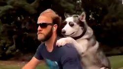 Paseo en moto con un perro de