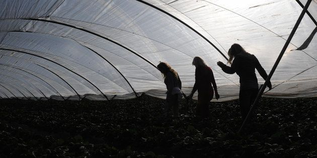 Un grupo de trabajadoras temporeras de la fresa de Huelva, en la campaña de