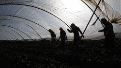 La Fiscalía investiga la posible explotación laboral y sexual de temporeras inmigrantes en