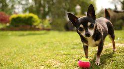 Un pueblo de Málaga comienza a analizar excrementos de perros para encontrar a sus