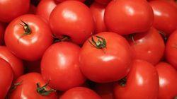Descubren que el extracto de tomate rojo revierte la inflamación de la