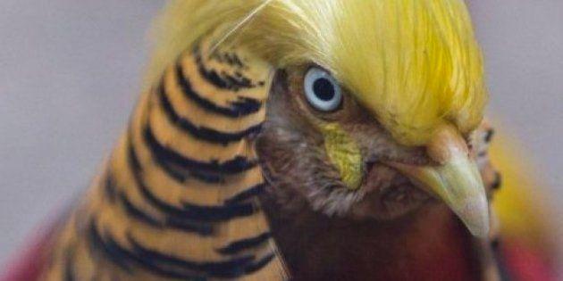 Este pájaro clavado a Trump se convierte en una auténtica
