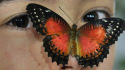 La mirada de la mariposa y otras 18 fotos del día que no te puedes
