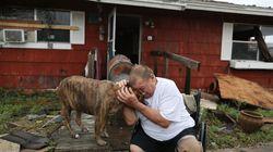Las conmovedoras fotos de los más peludos durante el huracán