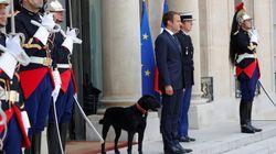 Macron ha encontrado a Nemo: así es el nuevo amigo del presidente