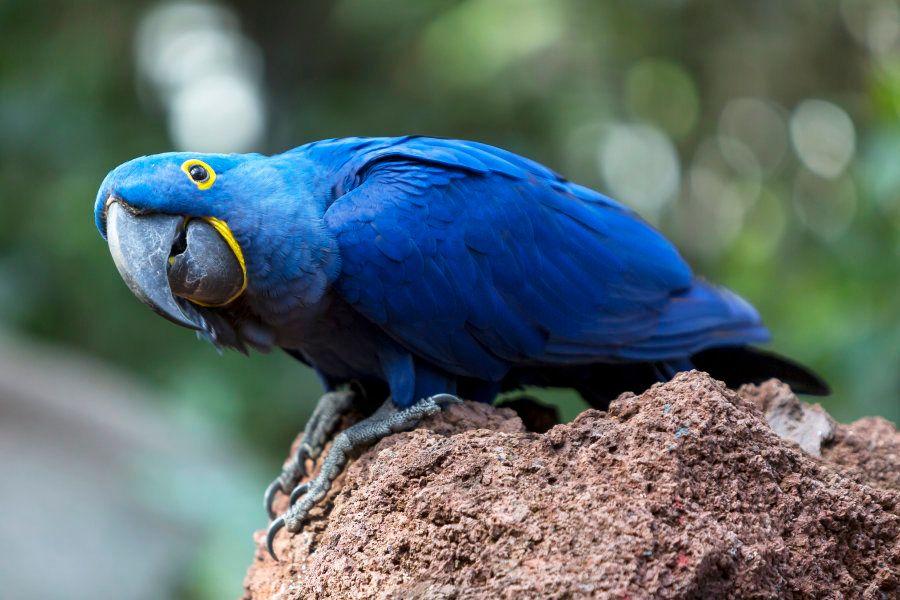 Así es Loro Parque de Puerto de la Cruz en Tenerife, elegido mejor zoológico del