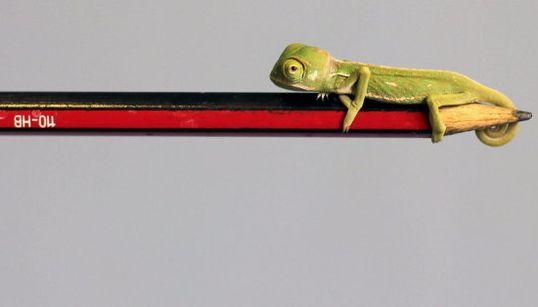 ¿Un camaleón real o un adorno? Esta y otras fotos del martes te harán caerte de la