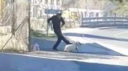 PACMA pide detener a este hombre por maltratar a un cerdo