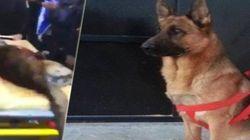 Ovación para 'Akeel', el perro policía muerto en el ataque de